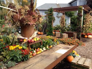 Fall Season at Farm AT Table Display Garden