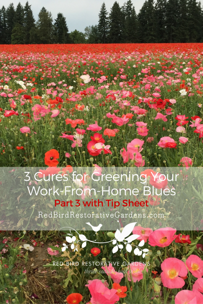 3-cures-for-greening-your-work-from-home-blues