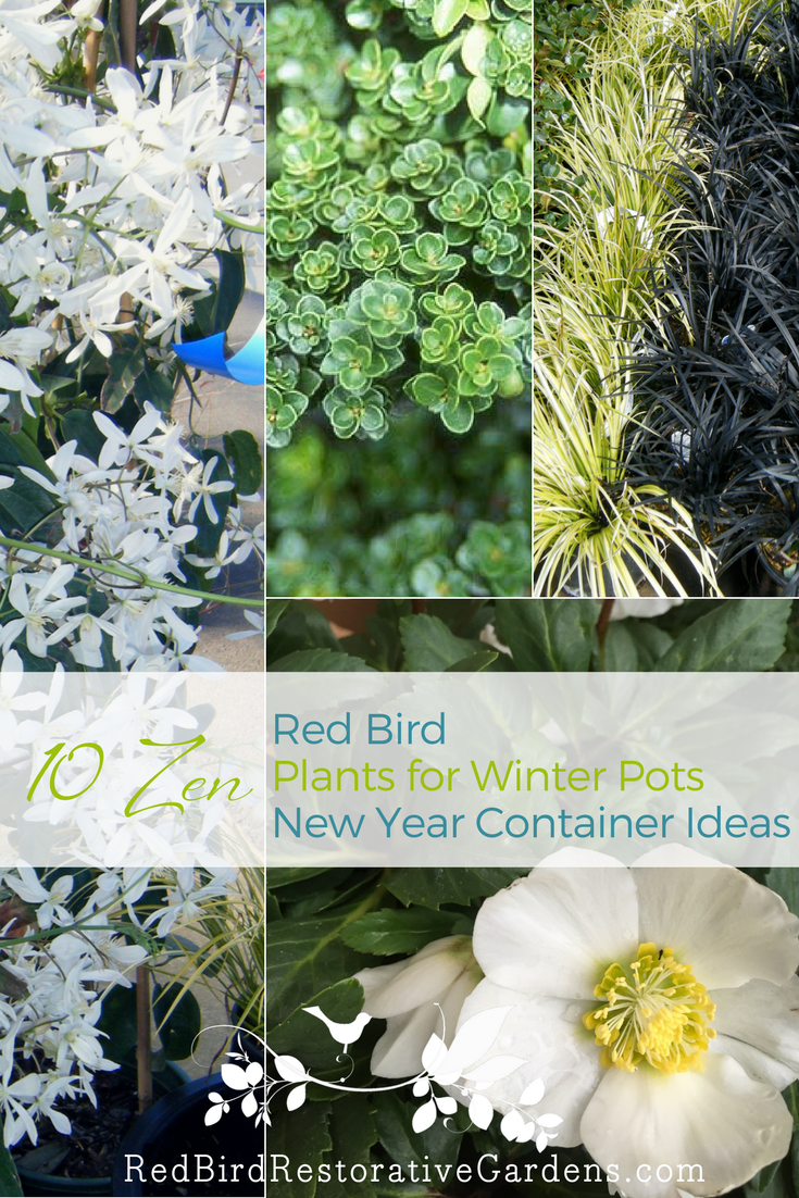 10 zen plants for your new year containers u2014 red bird design
